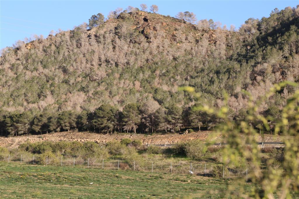 los bosques de Mazarrón se secan